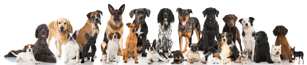 dog pack_258067712